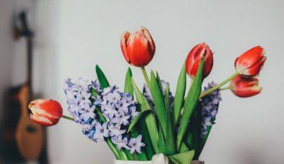 Ideas plantas alegria 8