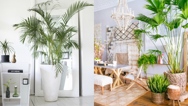 estilo tropical plantas