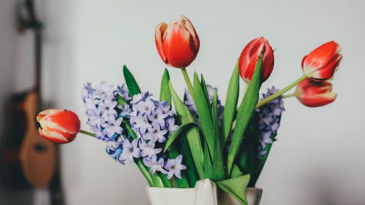 plantas alegria