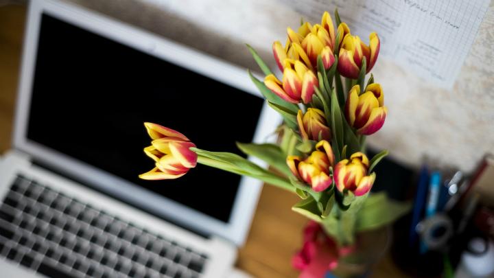 plantas alegria despacho