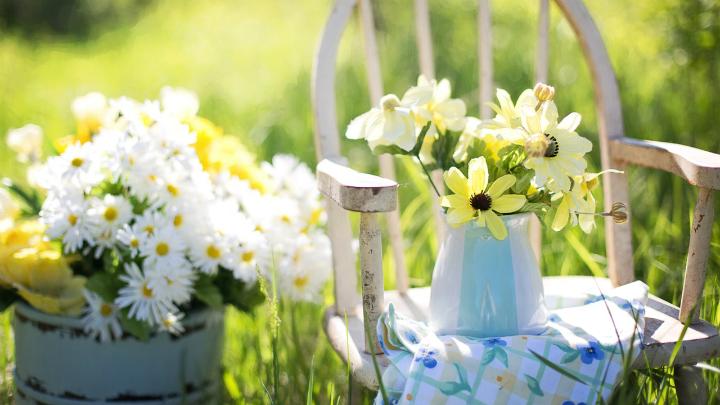 plantas alegria exterior