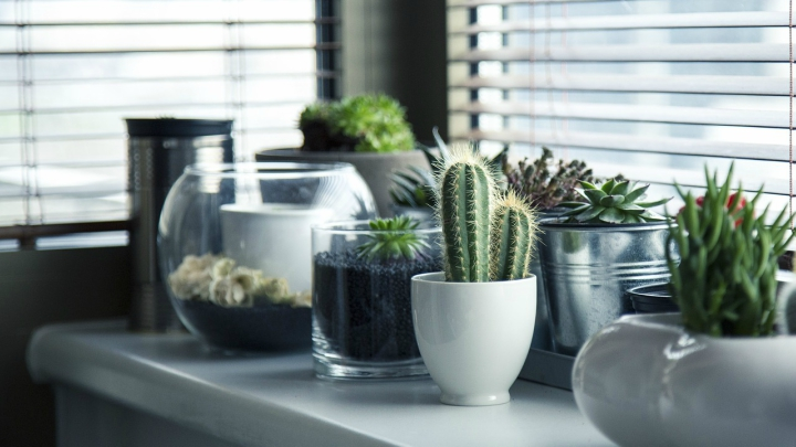 Plantas resistentes 2