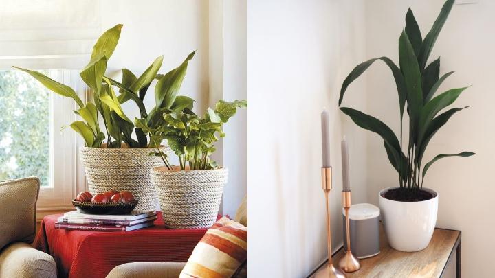 Plantas resistentes 5