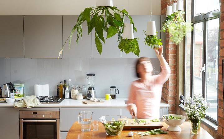 casa-con-plantas