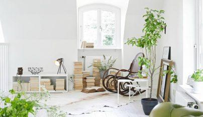 detalles-plantas