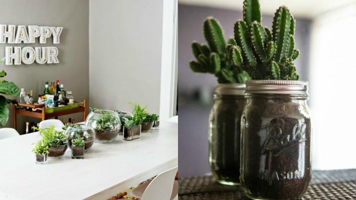 cactus-cristal