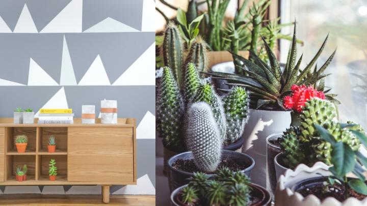 decoracion-cactus1