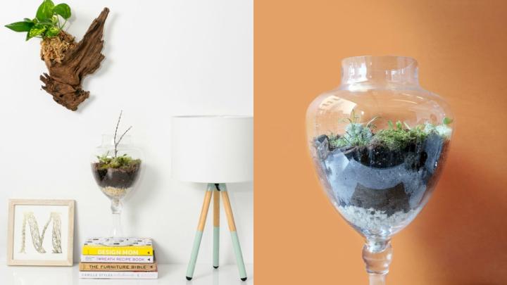 DIY-recipiente-planta-carnivora