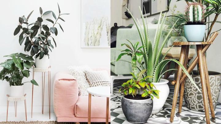 decoracion-plantas-interior