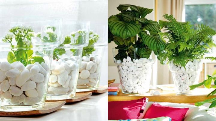 plantas-interior-piedras