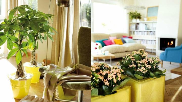 plantas-separar-espacios