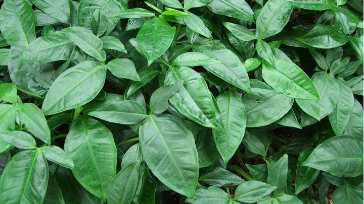 plantas-bano10