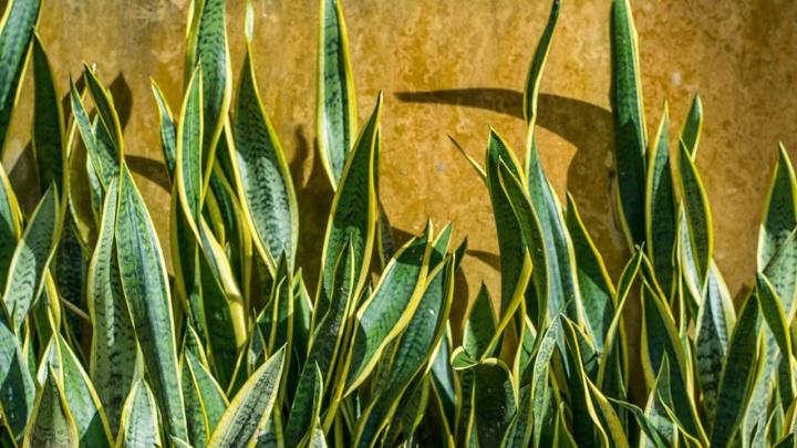 plantas-bano2