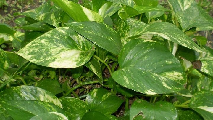 plantas-bano5