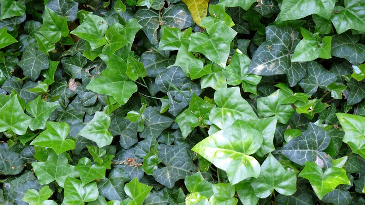plantas-bano7