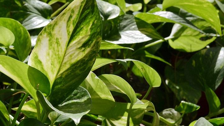 plantas-bano9