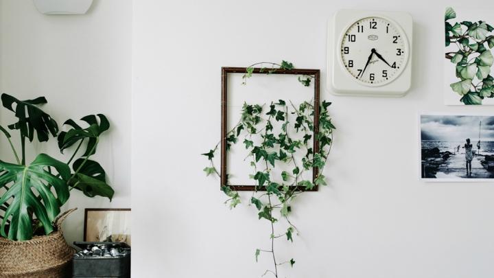 Plantas-enmarcadas