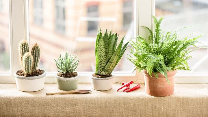 plantas-cocina