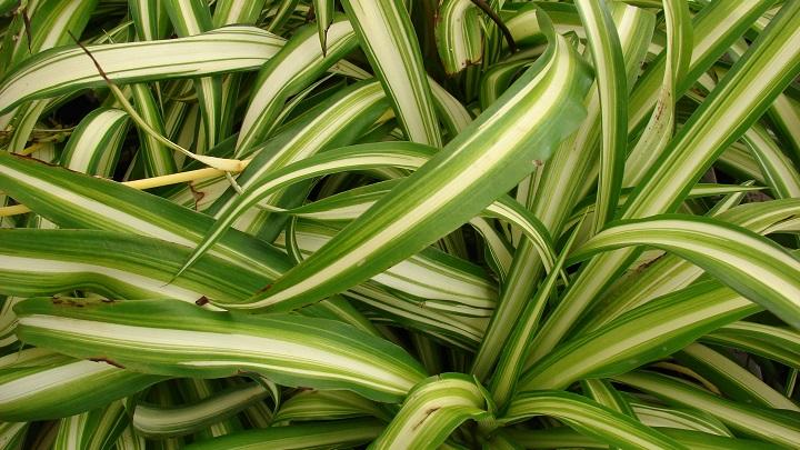 plantas-cocina4