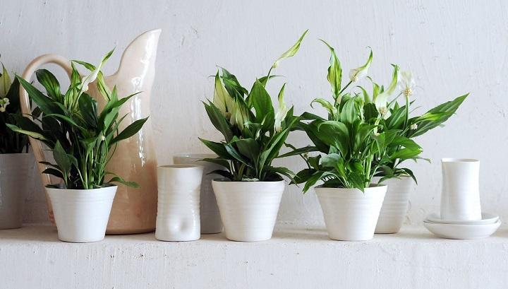 plantas-cocina5