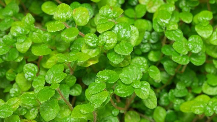 plantas-cocina8