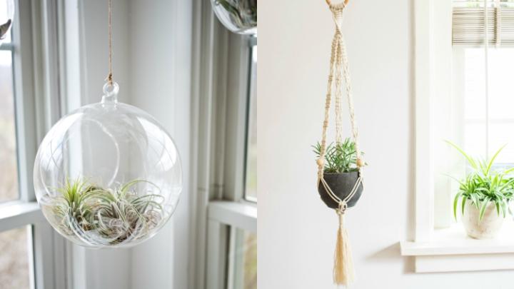 plantas-colgadas