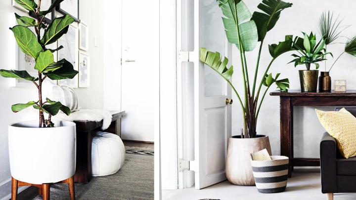 Habitaciones decoradas con plantas - Plantas para salon ...