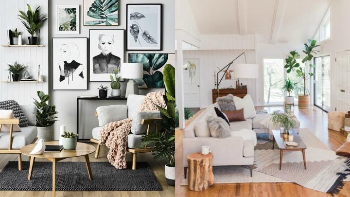ideas-plantas-decorar-salon
