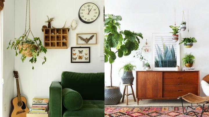 plantas-colgantes-salon