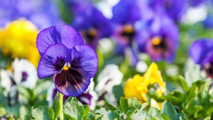 mejores-plantas-jardin-otono