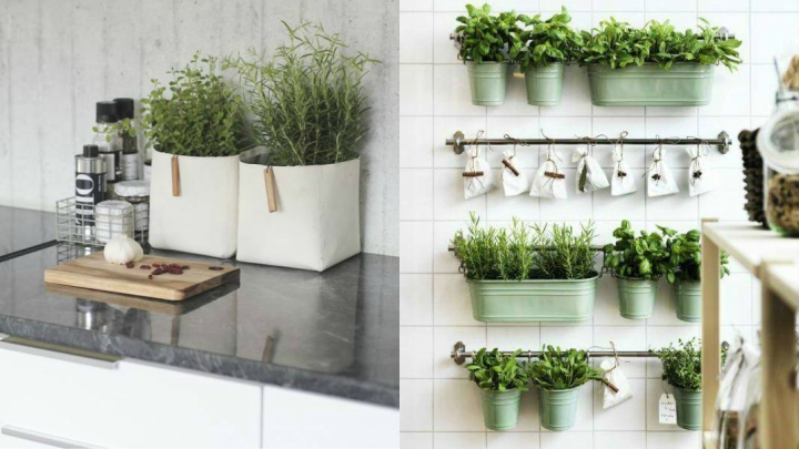 plantas-aromaticas-decoracion