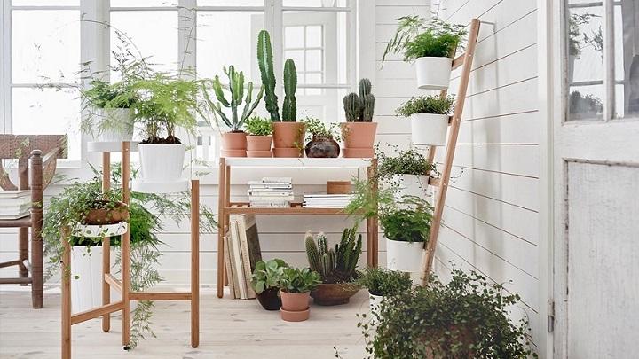plantas-razones