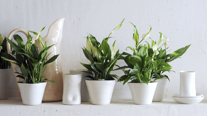 las-mejores-plantas-dormitorio