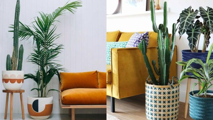plantas-grandes