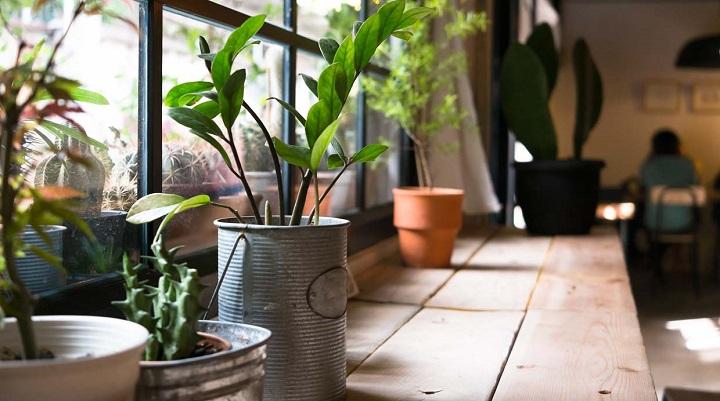 decoracion-plantas