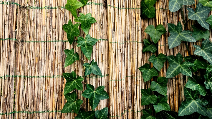 bambu-exterior