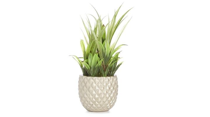 planta-con-maceta