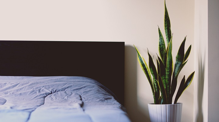 cama-con-una-planta-a-un-lado