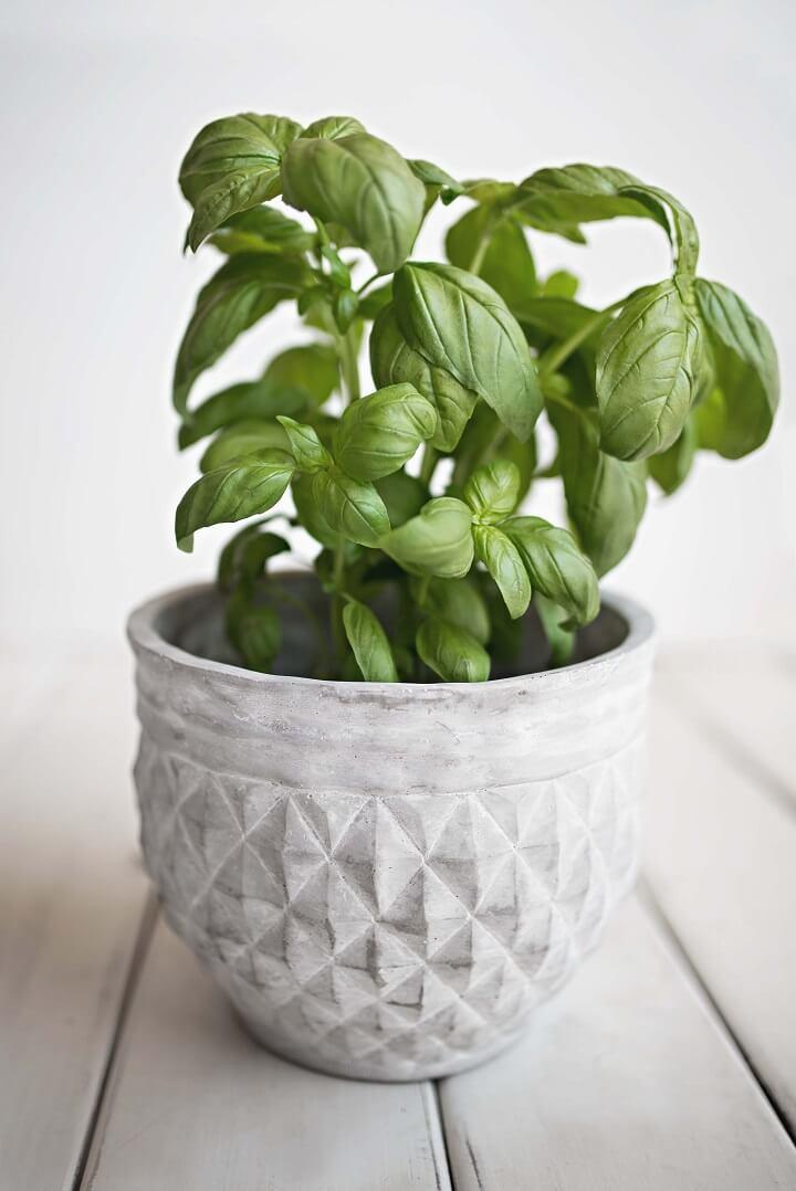 planta-en-una-maceta-gris
