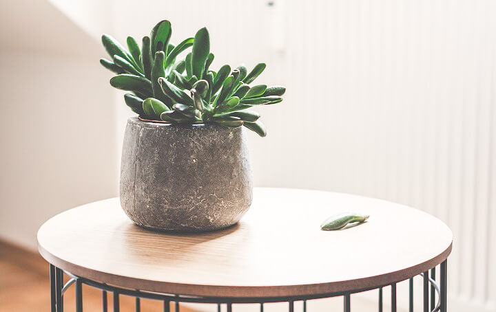 planta-en-una-maceta