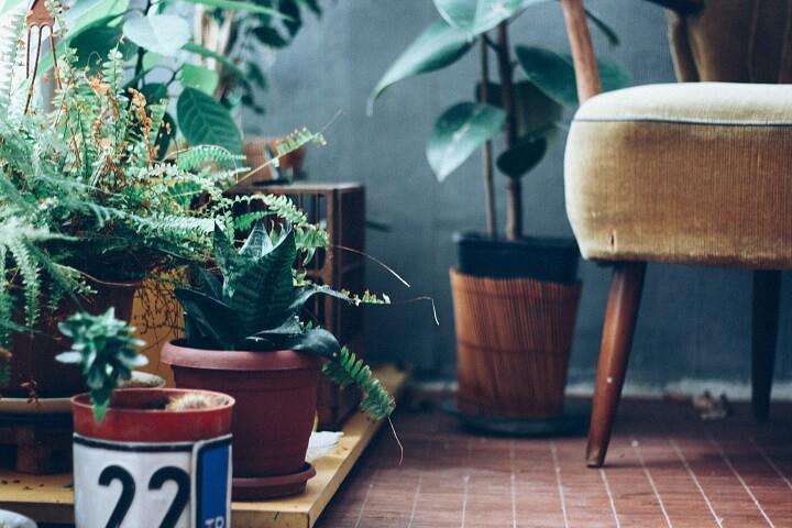 plantas-combinadas