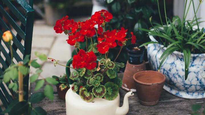 ideas-flores-verano-4