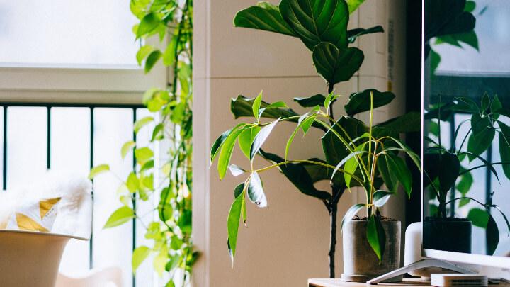 plantas-para-refrescar-ambientes