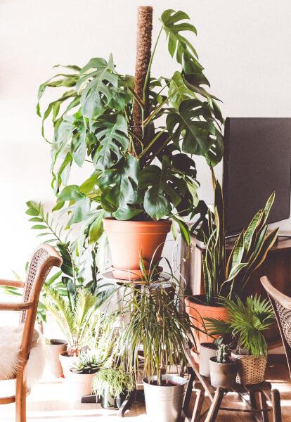 plantas-terraza
