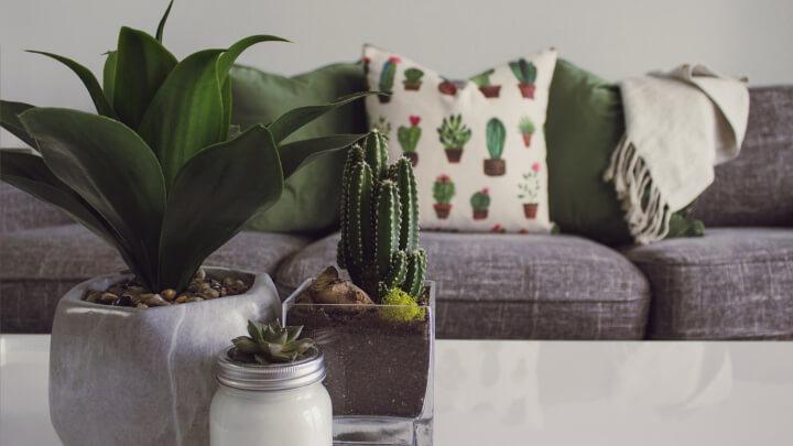 cojin-a-juego-con-cactus