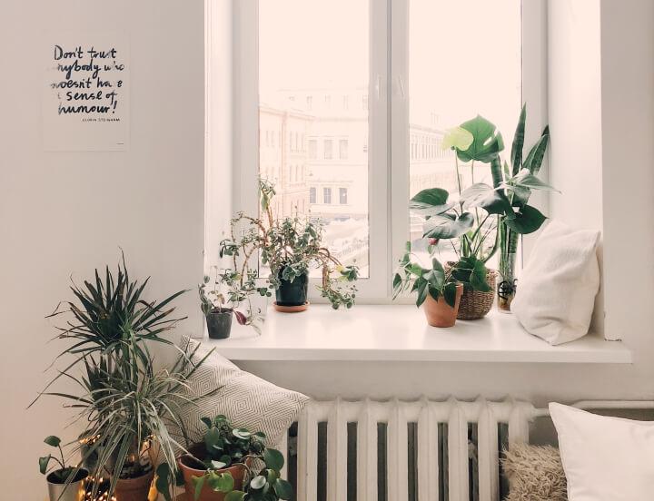 plantas-en-ventana