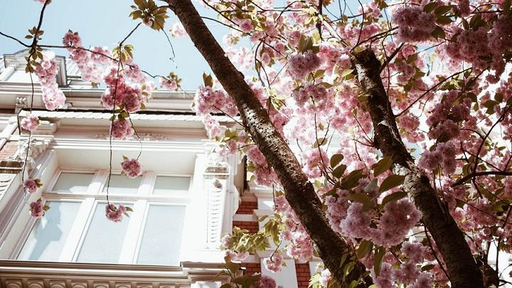 fachada-y-arbol