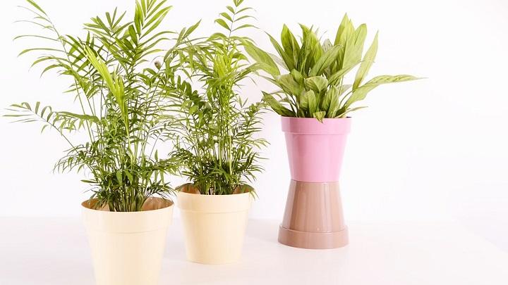 macetas-con-plantas