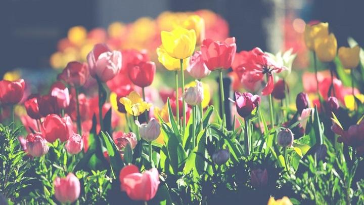 flores-de-colores