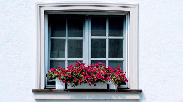 flores-en-la-ventana
